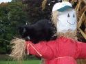 brubbercatandscarecrow